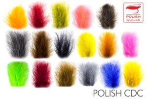 Polish Quill - Polish CDC