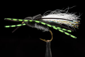 manic Flat Back Cicada Black fly