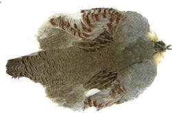 Wapsi Hungarian Partridge Whole Skin